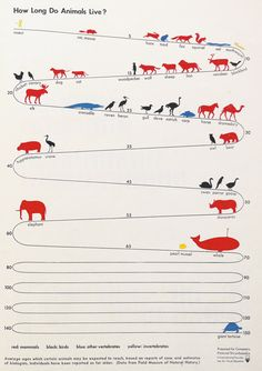 Chart of the ages of animals. Interesting. I wish cats and dogs fell into a higher range...