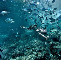 O hello fish! You looks so biutiii 🐠🐠 #karimunjawa #karimunjawaisland #underwater #seaworld