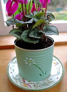 Upcycle food cans and fill them with plants, indoors or out!