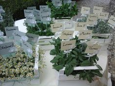 Shabby chic Tableau mariage-- wedding time - aromatic plants