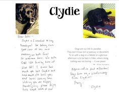 Testimonials from WestVet Veterinary Clients.