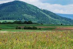 łąki kwietne w naturze, Zielona Metamorfoza