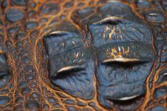 When Reptile Scales Resemble Beautiful Mosaics
