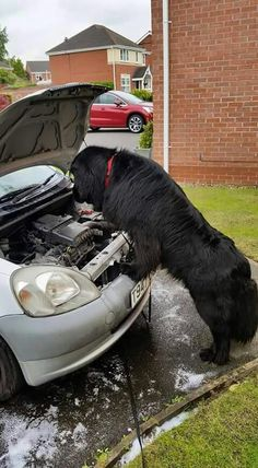 """""""Man ... I think it's the carb ... give it some gas"""""""