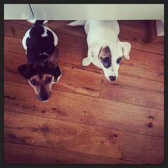 """""""Ei! Wij willen ons ei!!"""" ;-) #blijehond #puppyEhkä #puppyspam #myview"""