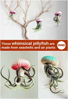Succulent jellyfish are easily created by sticking an air plant inside a sea urchin shell and hanging it by string.