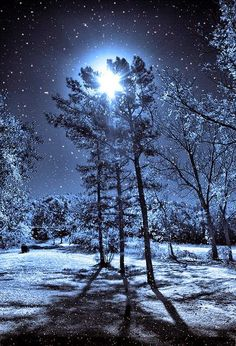 Magical Winter Night & Moon