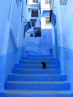 モロッコの青い秘境シャウエン×ネコのいる風景 - NAVER まとめ