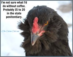 I'm not sure what I'd do without coffee...Probably 15-20 in the state penitentiary. #coffee  #chickens