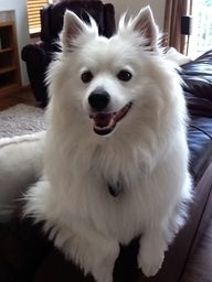 2013 Dumb Friends League Paw-parazzi Pet Photo Contest