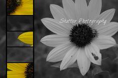 A flower in my yard. Shutter Photography, Shutters, Dandelion, Yard, Flowers, Plants, Blinds, Shades, Patio