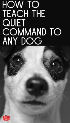 Does your dog bark too much? Check out these dog training obedience tips on how to teach the quiet command to any dog. Party Deco, Dogs Online, Easiest Dogs To Train, Training Your Dog, Training Collar, Dog Barking, Girl And Dog, Dog Behavior, Working Dogs