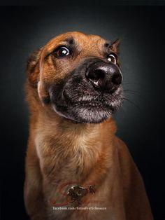 Fotos Frei Schnauze - Hundefotografie - Fotos Frei Schnauze