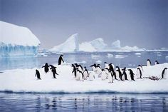 Antarctica    Our Antarctica expedition might be the single greatest travel adventure of your life. Antarctica is the planet's most exhilarating destination, and our expedition style of travel ensures you'll have the most enriching experience possible.