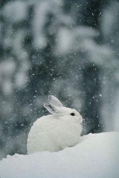 Little bunny enjoying the winter snow.