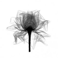 Bert Myers on The Creative Finder ( xray- flower )