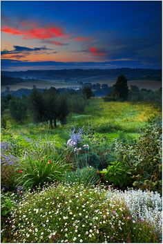 sunrise over the wildflowers in Cozzano, Umbria