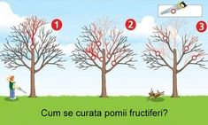 How to restore trees to their former strength - three steps to trim correctly - -