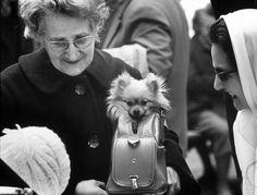Google Image Result for http://www.baxterboo.com/catdogblog/assets/content//LIFE/dog-purse-paris.jpg