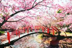japanese cherry blossom cerca con google dream gardens pinterest dream garden and gardens