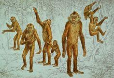 Investigadores del Instituto Catalán de Paleontología Miquel Crusafont (ICP) han descubierto que el Oreopithecus bambolii (mono del pantano)...