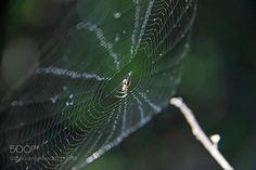 Spider's Web by jschneid via http://ift.tt/2m9Ejxx