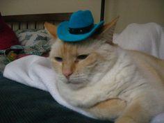 #cat in the hat