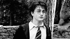 Coisa de fã: O Livro das Criaturas de #HarryPotter >> http://glo.bo/1FCuz2C