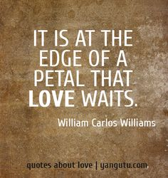 Quotes To Live By, Me Quotes, William Carlos Williams, Sweet Love Quotes, Sweet Sayings, Complicated Love, Wise People, Waiting For Love, Get Educated