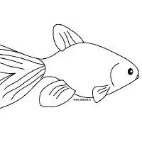 Coloring goldfish