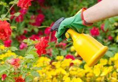 Pare che il pomplemo abbia il pollice verde...  Per proteggere le piante dai parassiti spruzzatele con acqua mescolata al succo di un pompelmo. In un normale vaporizzatore il succo di un pompelmo mescolato ad acqua può contribuire alla difesa delle vostre piante.