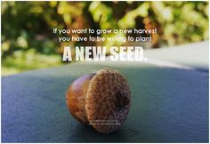 If you want to grow a new harvest you have to be willing to plant a new seed. - Lisa Nichols #change #qotd #quote #inspirational #inspirationalquote #inspirationalwords