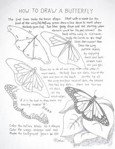 How to Draw Worksheets for The Young Artist: How to Draw A Monarch Butterfly Les. - How to Draw Worksheets for The Young Artist: How to Draw A Monarch Butterfly Lesson and Worksheet - Animal Drawings, Pencil Drawings, Documents D'art, Art Handouts, Butterfly Drawing, How To Draw Butterfly, Free Printable Art, Printable Coloring, Art Worksheets