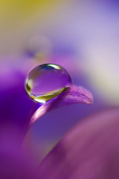 Water drop own flower petal / purple pink yellow / Bokeh Purple Love, All Things Purple, Purple Rain, Shades Of Purple, Pink Yellow, Dew Drops, Rain Drops, Amazing Photography, Art Photography