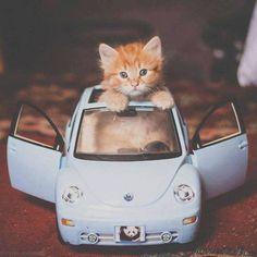 Kitten Car (VW)