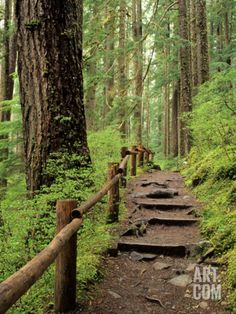 Rainforest with Trail, Sol Duc Valley, Olympic National Park, Washington, USA Photographic Print by Jamie & Judy Wild at Art.com