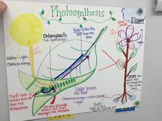 A chart I made on the process of photosynthesis.