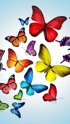 butterfly hq wallpaper 1024x768 - photo #35