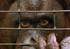 Una buona notizia per gli animali. Dopo 140 anni di attività. chiude lo zoo di Buenos Aires. Verrà trasformato in un parco ecologico: il sindaco