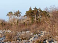 Co. Clare: Attyslany Wood. Irish Landscape, My Photos, Country Roads, Mountains, Wood, Nature, Travel, Madeira, Naturaleza