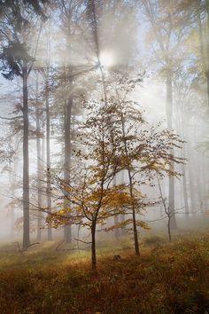 Light in the Mist by Martin Rak on 500px