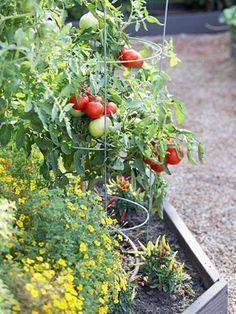 Building a raised garden