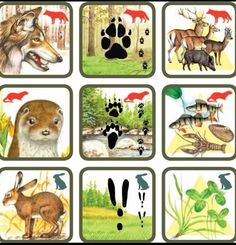 Pexetrio Plus: Savci Forest Animals, Woodland Animals, Animal Activities, Activities For Kids, Animals For Kids, Animals And Pets, File Folder Activities, Animal Tracks, Forest Theme