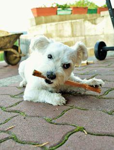 dog & wood