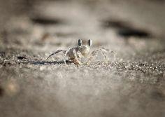 Little Sand Crab by Jensen  Chua on 500px