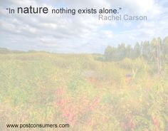 Rachel Carson Quote: Nothing Exists Alone - Postconsumers Earth Day Quotes, Green Quotes, Rachel Carson, Alone, Be Yourself Quotes, Woman Quotes, Favorite Quotes, Environment, How Are You Feeling