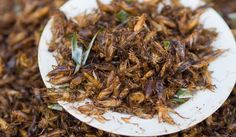 Insects are surprisingly nutritious and environmentally-friendly to raise. Plus, most of the world already loves them.