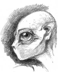 creature pencil drawings - Google Search