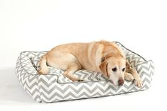 A patterned dog bed is a fun way to give your new family member his own personal space -- with personality!
