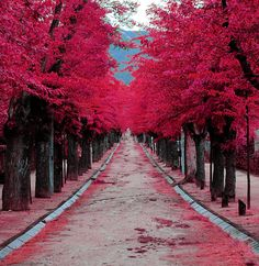 a pink tree-lined street in madrid spain